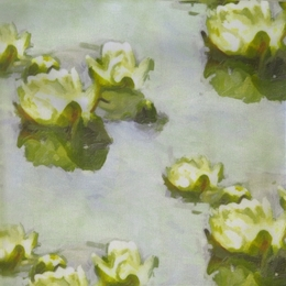 WATERLILY 05